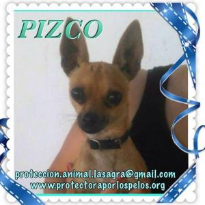 Pizco