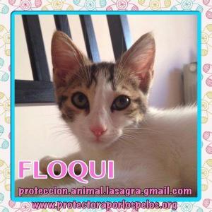 Floqui