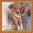 en adopción Dante