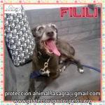 en adopción Filili