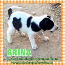 en adopción Brina