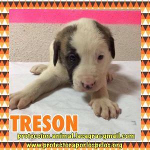 Treson