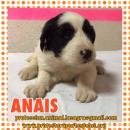en adopción Anais
