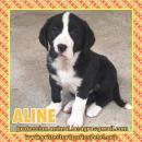en adopción Aline