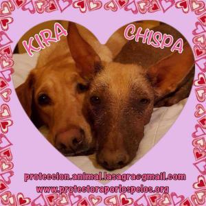 Chispa y Kira