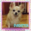 en adopción Patatita