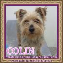 en adopción Colin