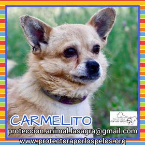 Carmelito
