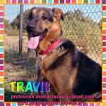 en adopción Travis