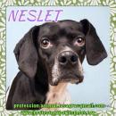 en adopción Neslet