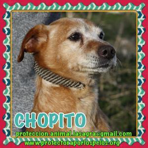 Chopito