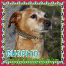 en adopción Chopito