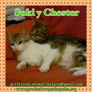 Suky y Chester