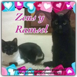 Zeus y Ramsel