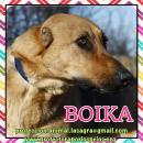 en adopción Boika