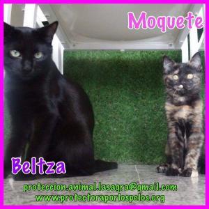 Beltza y Moquete
