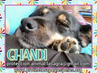 en adopción Ghandi