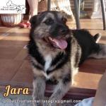 en adopción Jara